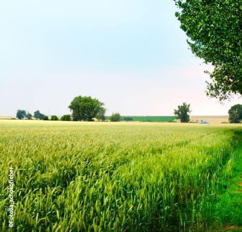 Die Landschaft der Hohen Börde