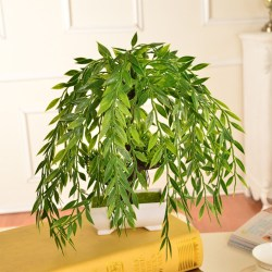 Small Of Weeping Willow Bonsai