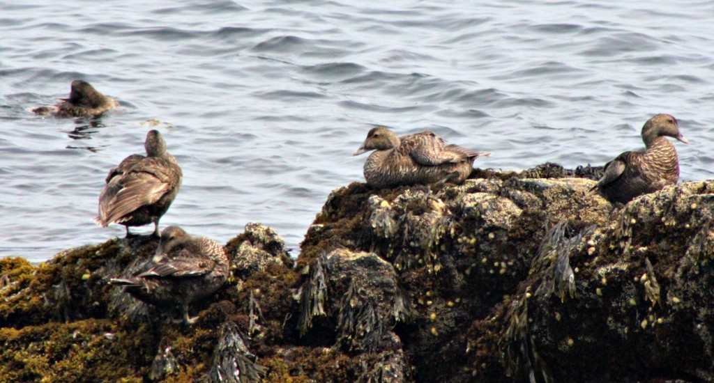 The ladies that lunch…on the rocks…