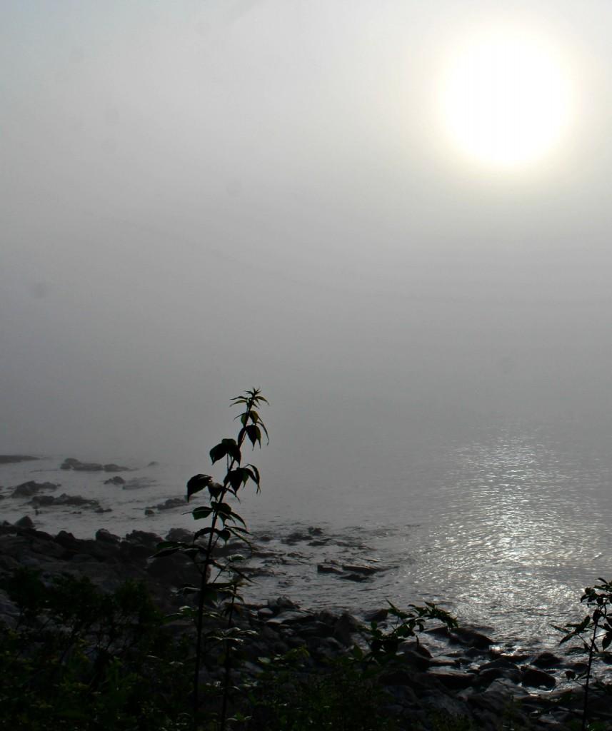 Cooling fog July 28 2016