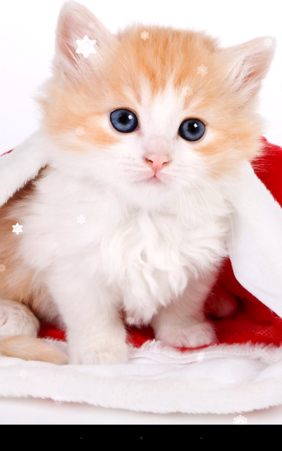 Christmas Cat Live Wallpaper App Ranking and Store Data | App Annie