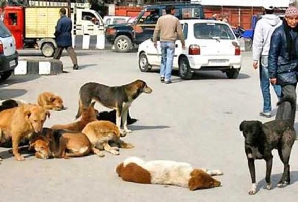 SC ने दिया आवारा कुत्तों की नसबंदी का आदेश