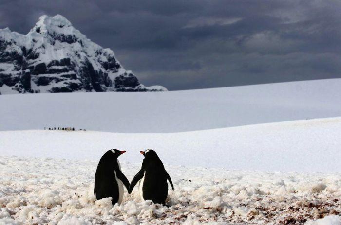 Pingwiny Spacer w parze