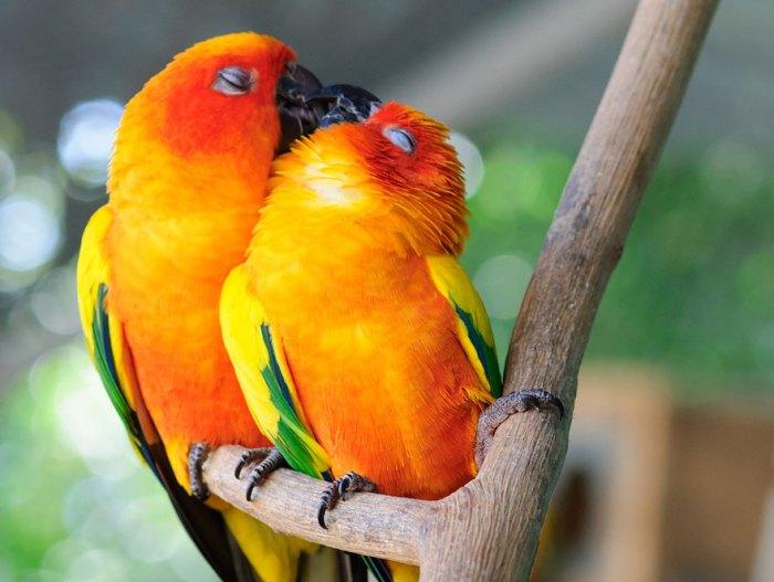 Parrot para