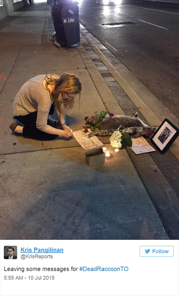 dead-raccoon-memorial-shrine-mourning-deadraccoonto-toronto-18