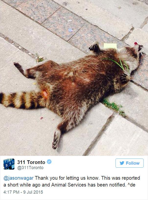 dead-raccoon-memorial-shrine-mourning-deadraccoonto-toronto-19
