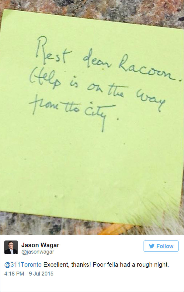 dead-raccoon-memorial-shrine-mourning-deadraccoonto-toronto-20