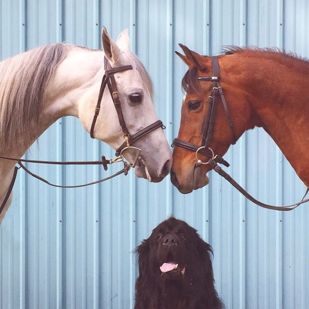 fotos-amistad-hijo-julian-perros-caballo-stasha-becker