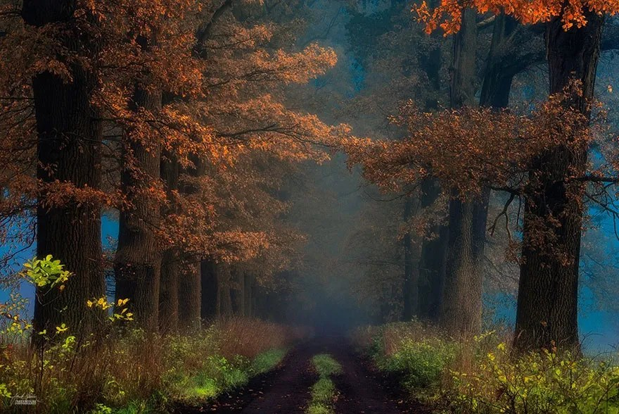 autumn-forests-photography-janek-sedlar-2