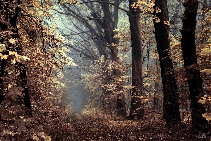 autumn-forests-photography-janek-sedlar