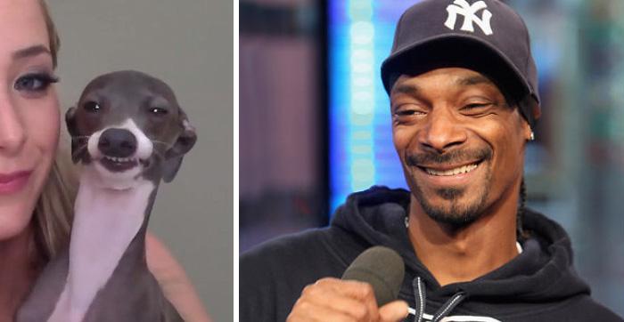 Ten pies wygląda jak Snoop Dogg