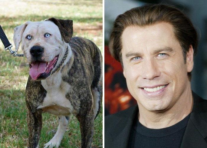 Pies wygląda jak John Travolta