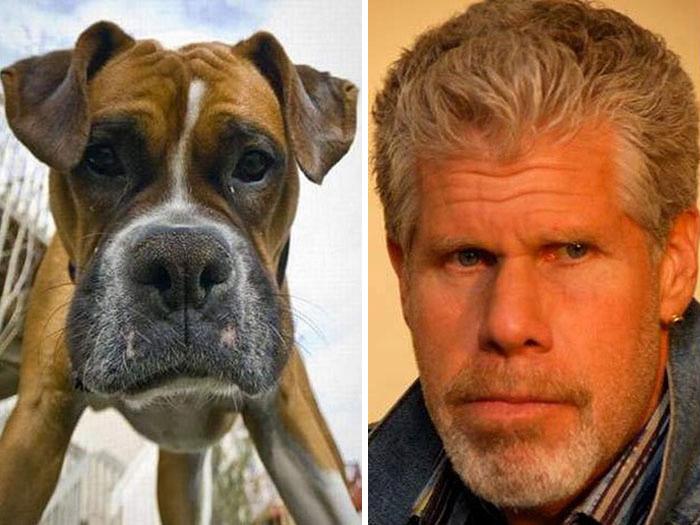 Pies Wygląda Ron Perlman