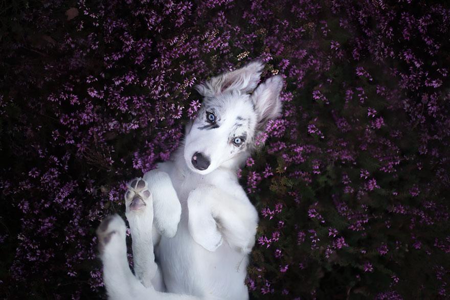 Emozionanti ritratti di cani scattati dalla fotografa polacca Alicja Zmyslowska