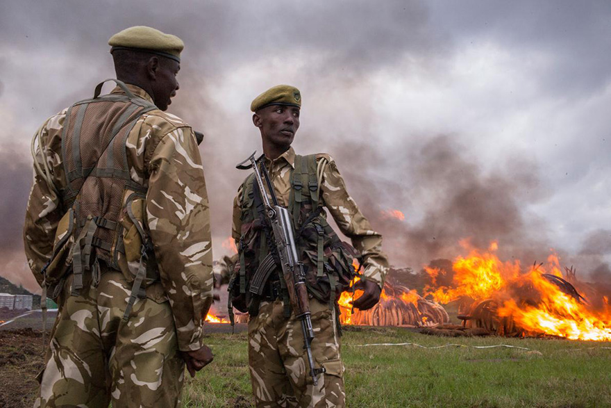 kenya-burns-ivory-elephant-rhino-poaching-a14