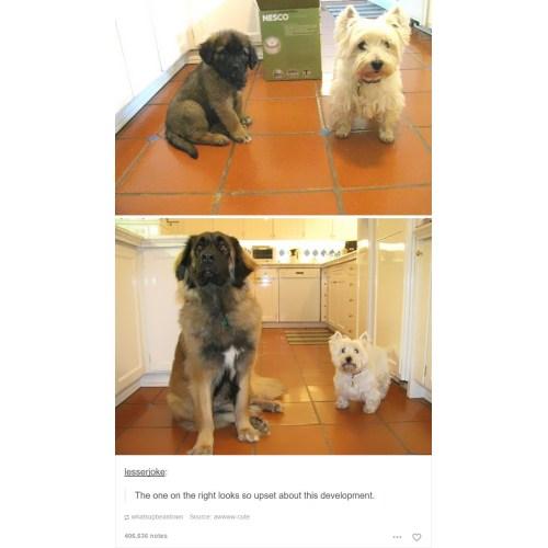 Medium Crop Of Laughing Dog Meme