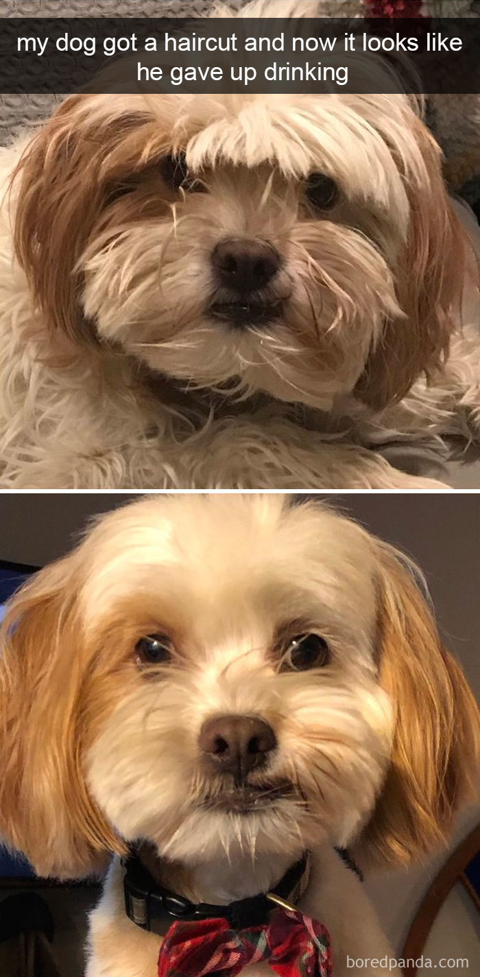 Ritzy Dog Snapchats That Are Impawsible Not To Laugh At Dog Meme Avi Reddit Dog Meme Avi 10 Hours bark post Dog Meme Avi