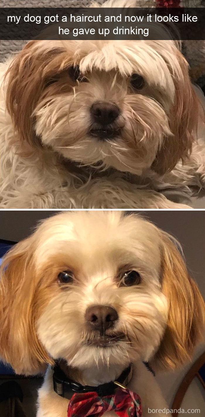 Large Of Dog Meme Avi