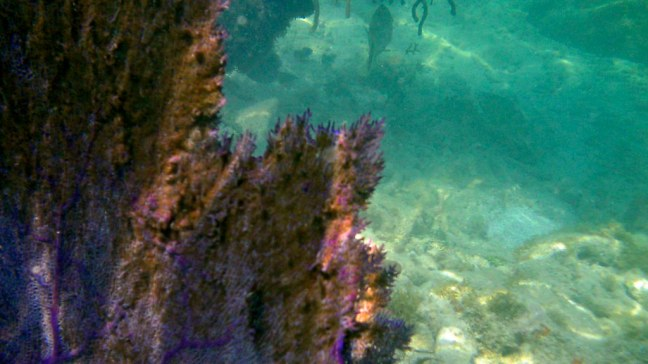 Coral at Dry Tortugas National Park