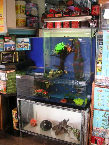 Fish, Fish Tanks & Aquarium Accessories | Tropical Fish.SoonHeng.com