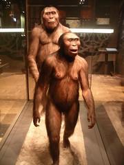 Naturhistoriska Riksmuseet