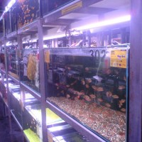 fish aquarium store - Posted on July 8, 2011 by Guest Writer ? 5 Comments ?