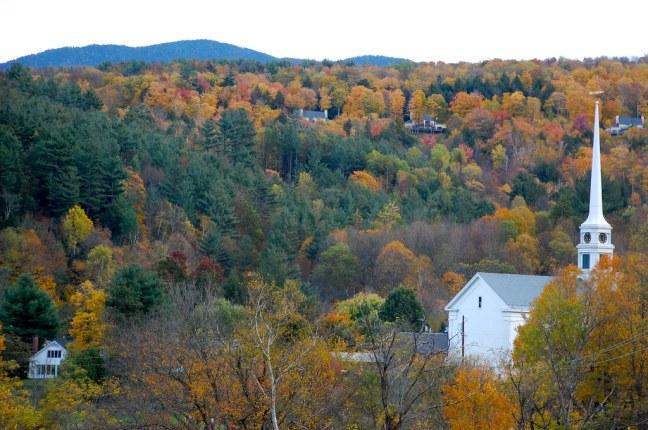 Foliage of Stowe