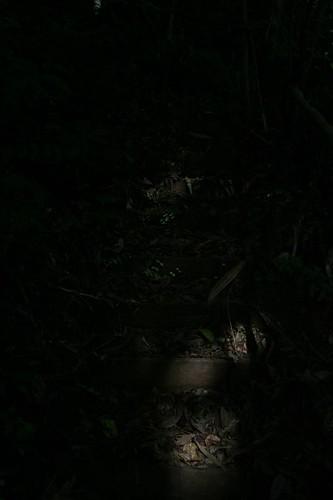 leaves, datanli diablo reserve