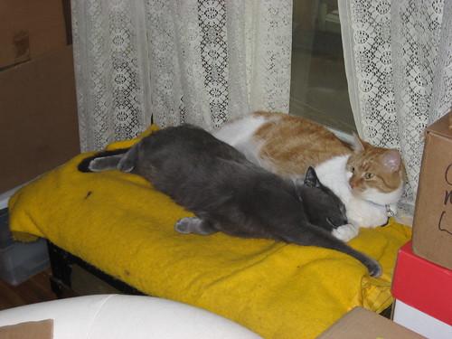 Huckleberry and Drusilla