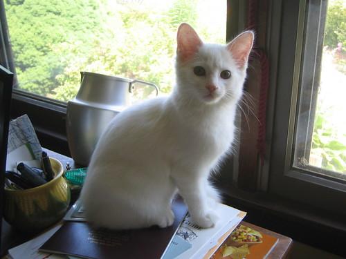 Michelle's cat