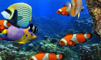Free 3d HD Live Fish Wallpaper APK Download For Android ...