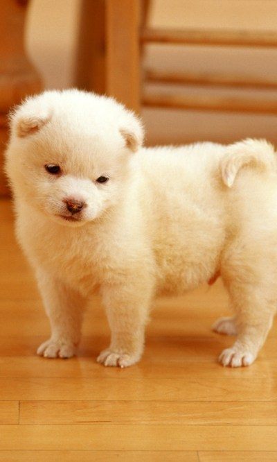 Free Cute Puppy Live Wallpaper 2 APK Download For Android | GetJar