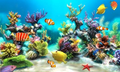 Free HD Fish Live Wallpaper - Live Fun APK Download For Android | GetJar