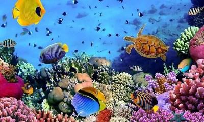 Free 3D Nature Live HD Wallpaper APK Download For Android   GetJar
