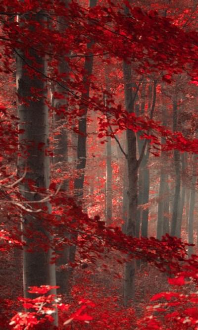 Free Enchanted Forest Live Wallpaper APK Download For Android | GetJar