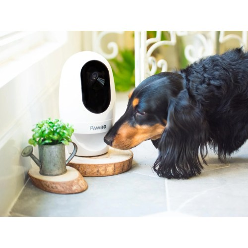 Medium Crop Of Best Indoor Dogs