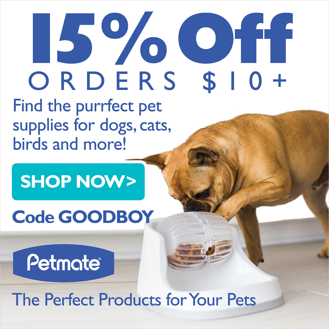 Inspiring A Half Dog Dogs Cats Chesnut Mutts Dog Iq Test Hyperbole Petmate Immuneiq Allergy Test Cat Iq Test bark post Dog Iq Test