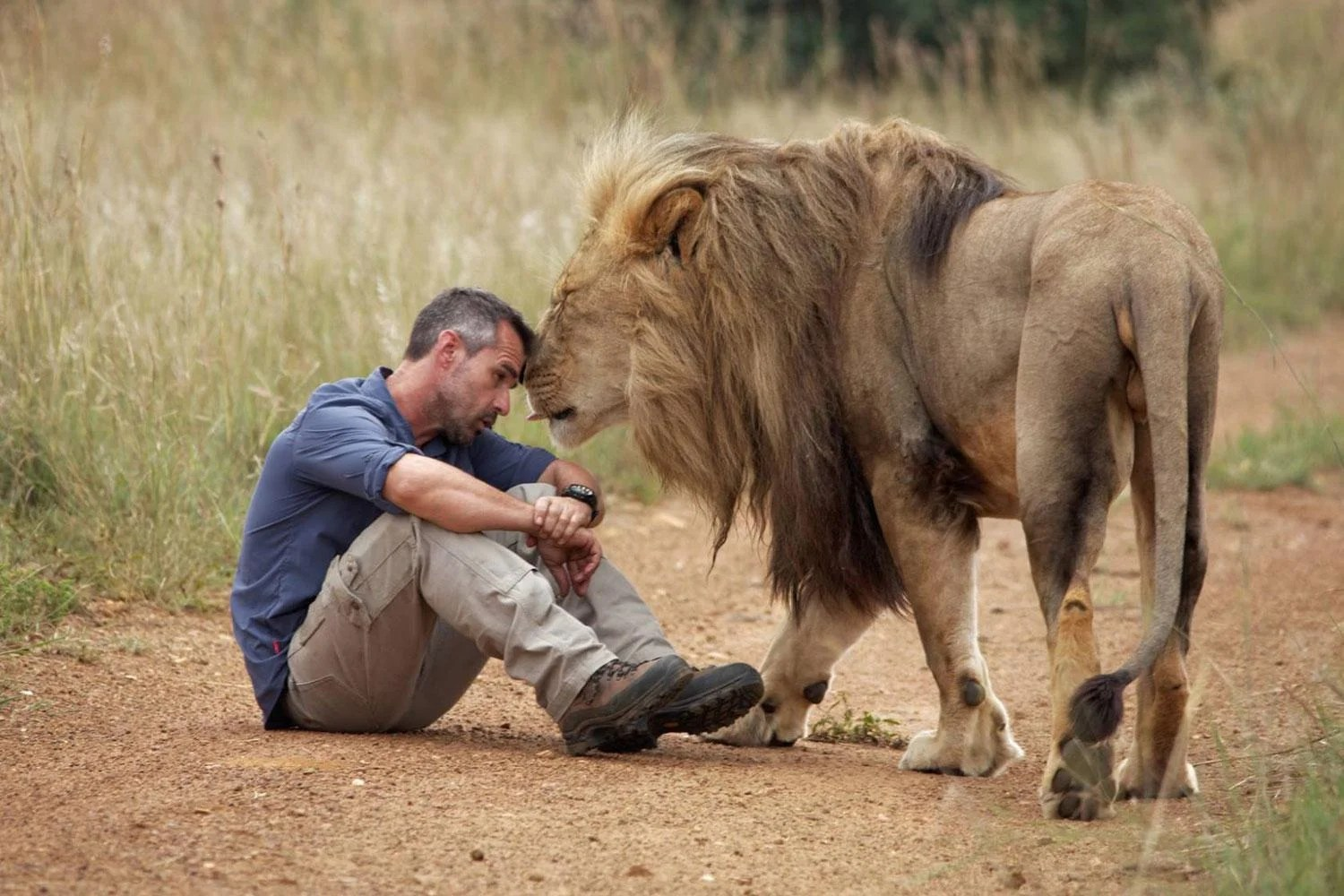 Woman mauled to death at  Lion Whisperer  sanctuary in South Africa     Lion Whisperer Kevin Richardson with one of his animals