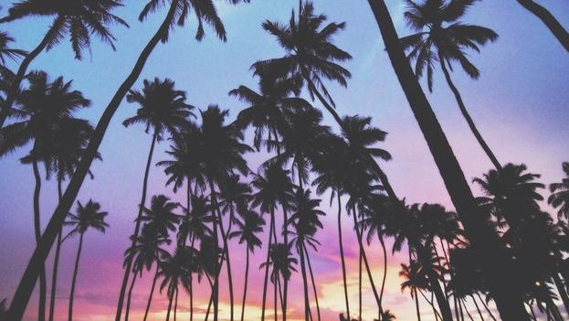 Exellent Palm Trees Sunset Tumblr Tree Love M In Decor