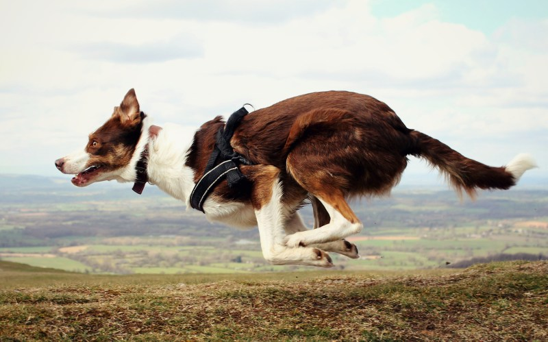 Large Of Border Collie Names