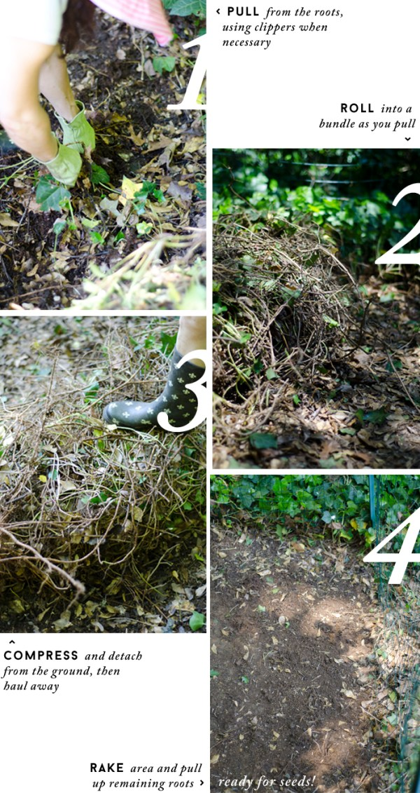 HOW TO REMOVE IVY / #Gardening with Thou Swell