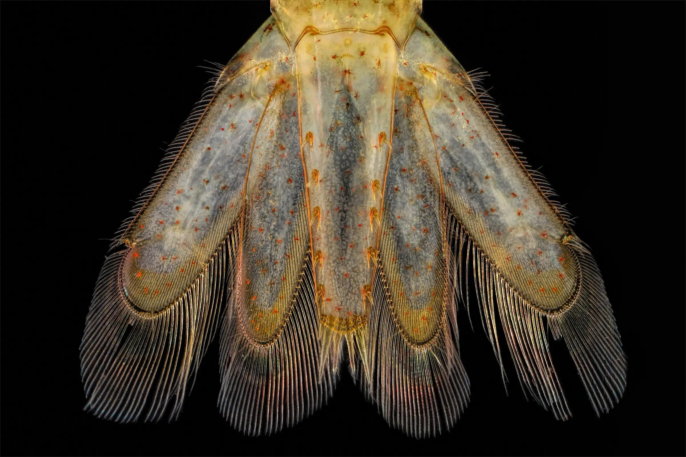 Tail of a small shrimp