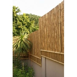 Small Crop Of Bamboo Privacy Screen