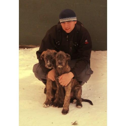 Medium Crop Of Irish Wolfhound Rescue