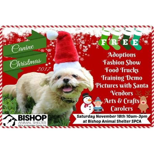 Medium Crop Of Bishop Animal Shelter
