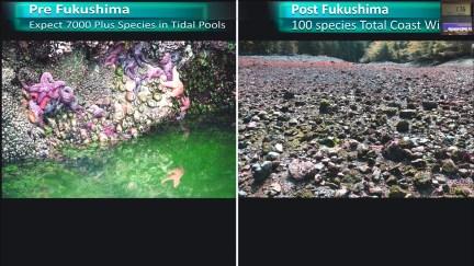 Fukushima Story 264.jpg