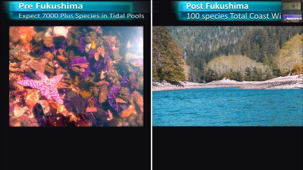 Fukushima Story 270.jpg