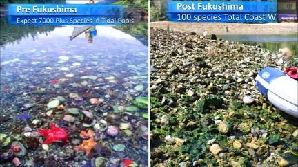 Fukushima Story 334.jpg