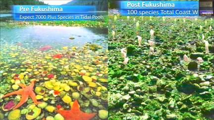 Fukushima Story 337.jpg