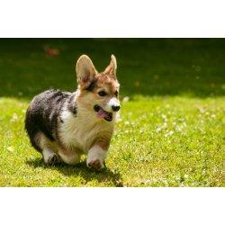 Small Crop Of Quiet Dog Breeds